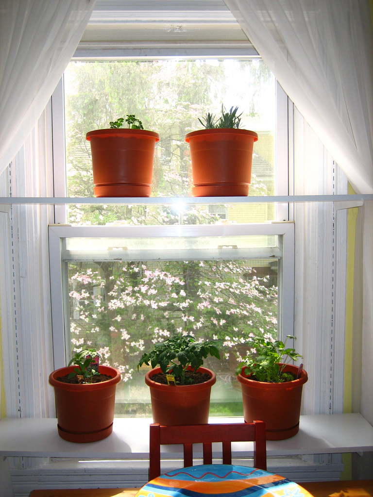 Interior designs rooms with plants - Houseplants thrive low light youre window sill ...