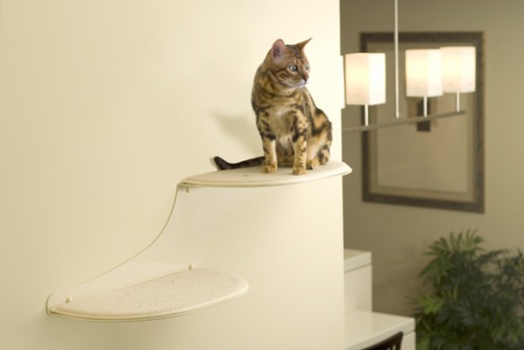 cat-shelf-2