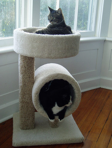 twin cat furniture