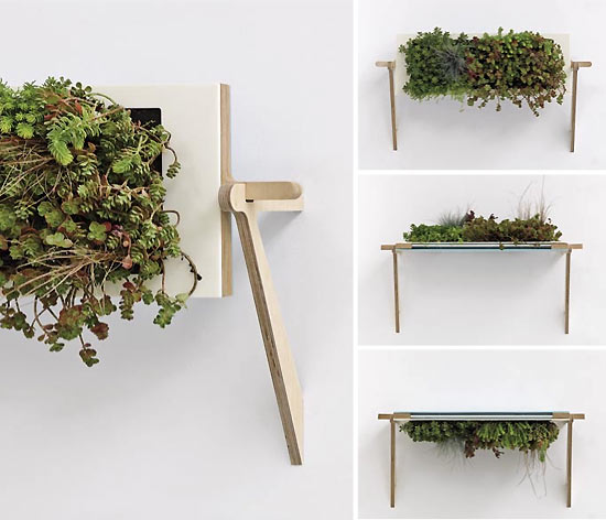 home sweet home indoor plants that purify air in living