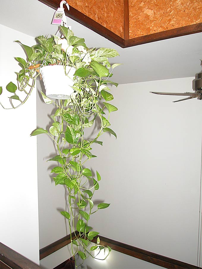 Indoor plants that purify air in living spaces Images of indoor plants