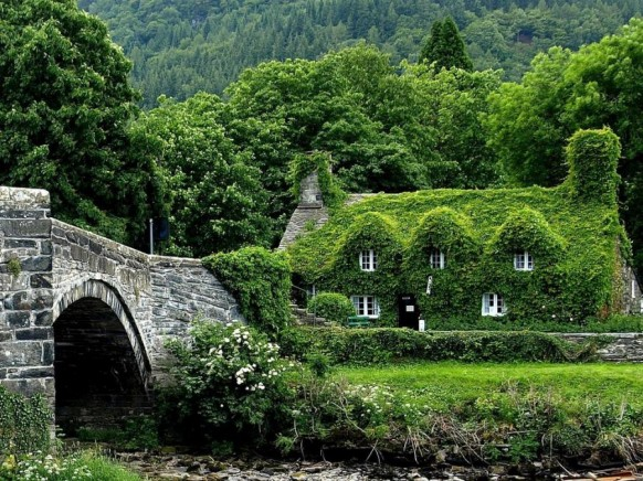 Ivy covered Cottage House in the woods 582x436 - Dabbang Cottages hain yaar...!!!