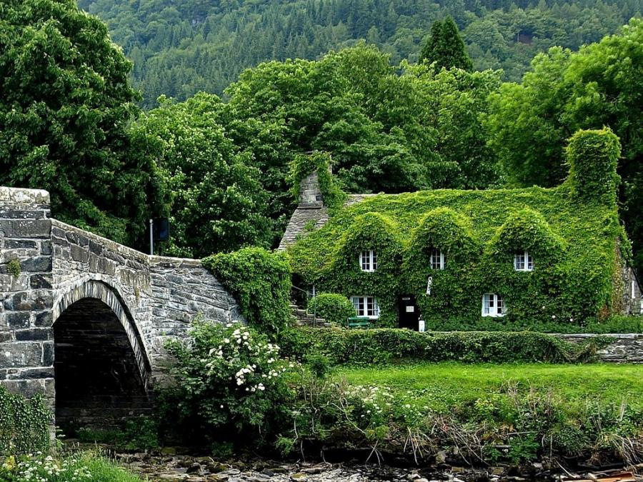 Fairy tale cottages for The ivy house