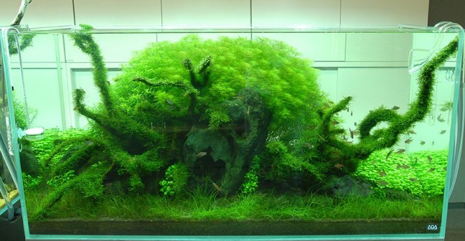 Amano Aquascape