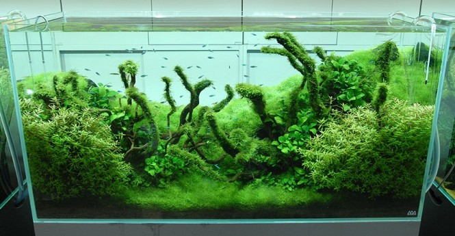 Amano Aquascaping