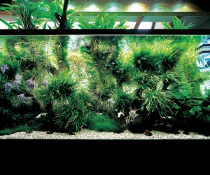 The green living creations reach a peak of perfection, and usually only last up to 6 months before the original creative vision is lost altogether and rescaping is needed. In these images we find dramatic scenes inspired by grassy fields, mountains, forest streams and oceans, with asymmetrical hardscapes structured in driftwood and rock.
