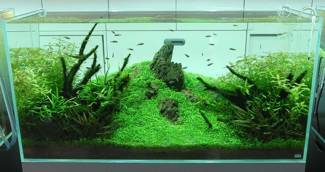 Japanese Aquascape