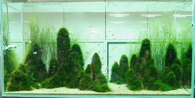 Japanese Aquascaping