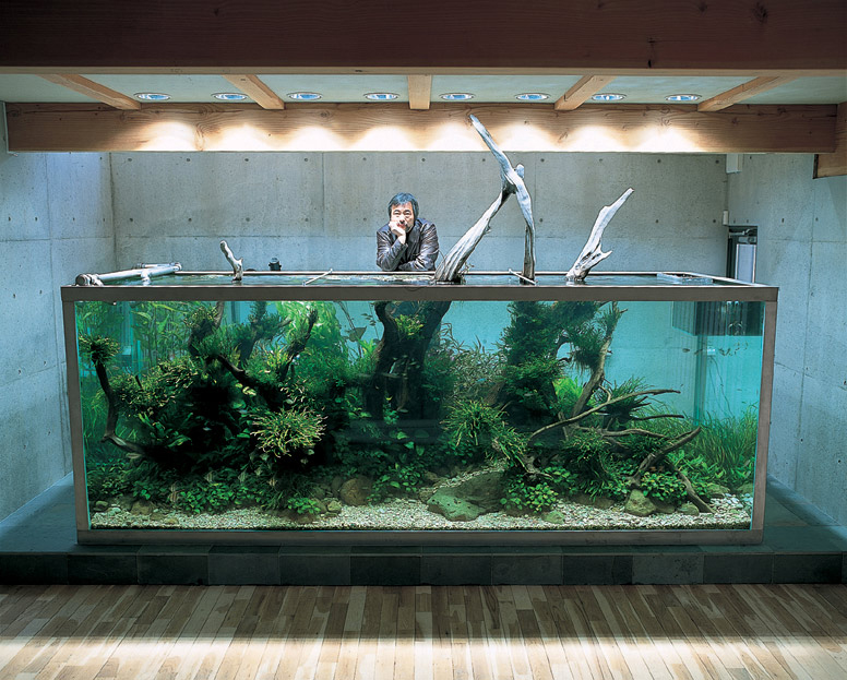 the japanese nature style during the 1980s where a planted aquarium