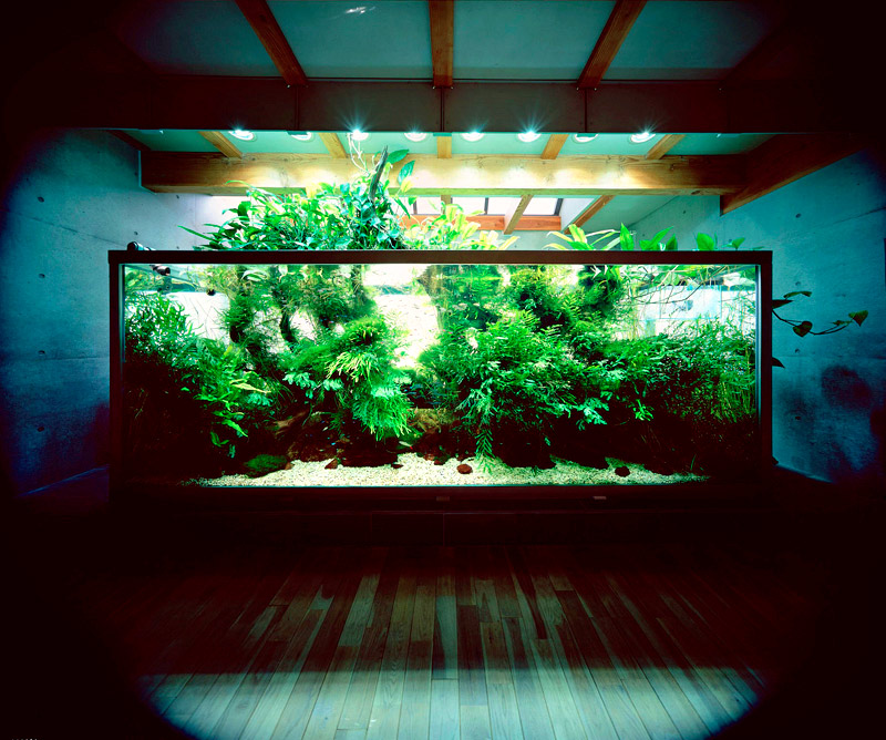 These dreamlike underwater landscapes come to us courtesy of Takashi ...