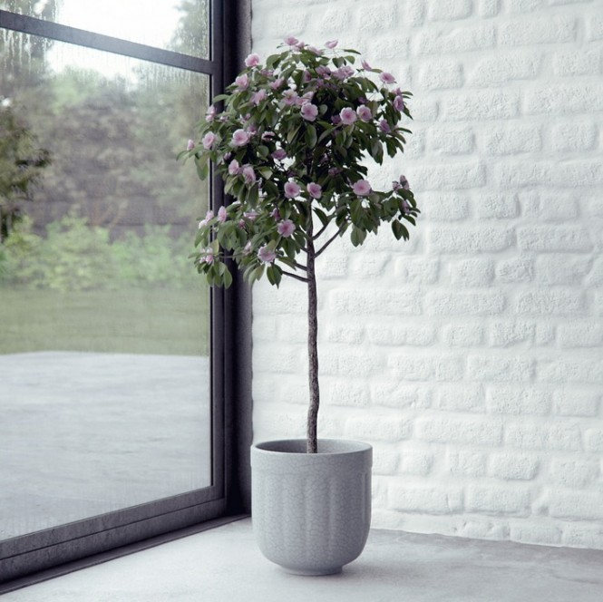 House plant render by BBB