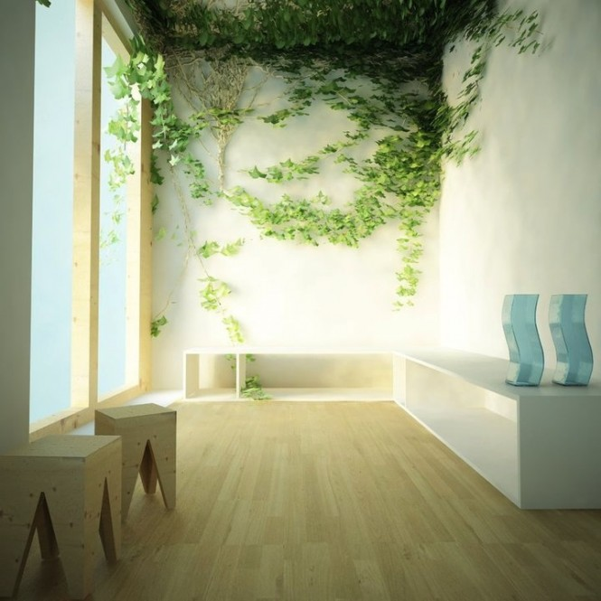 Indoor climbing plants form a beautiful feature for nature loving homeowners.