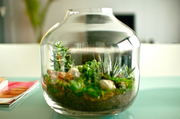 A curiosity such as this display of miniature succulents, gives a room an intellectual quality. Interior design, is at the moment, seeing a resurgence in styling worthy of a natural history museum. Specimens from the natural world are being encased in glass in the form of domes, cloches and antique display cases, making for intriguing interiors and stimulating conversation.