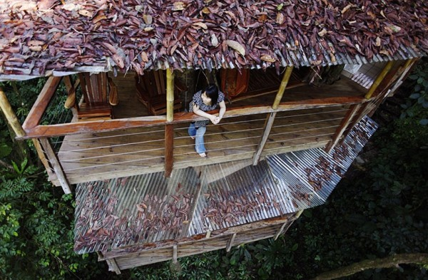 Sustainable treehouse exterior 4