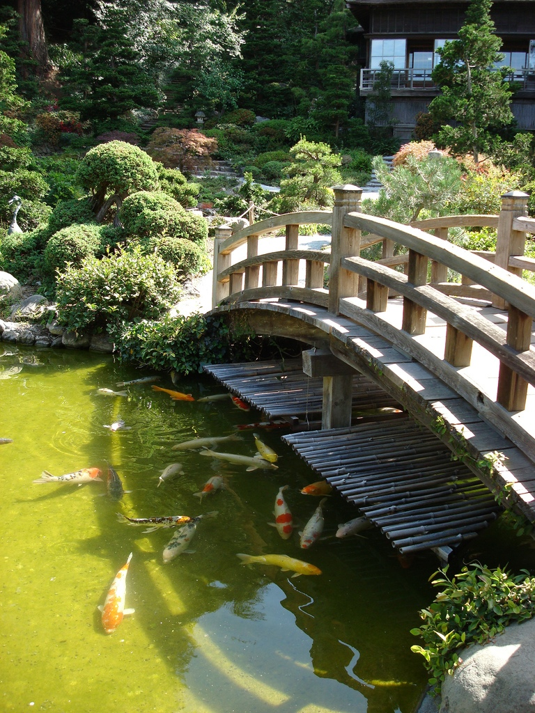 Floating the surface on pinterest koi fish pond fish for Pictures of koi fish ponds